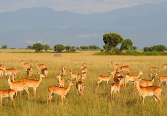 Kasenyi plains of Queen Elizabeth National park