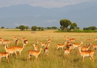 Kasenyi plains of Queen Elizabeth National park