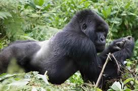 Go Uganda Safari